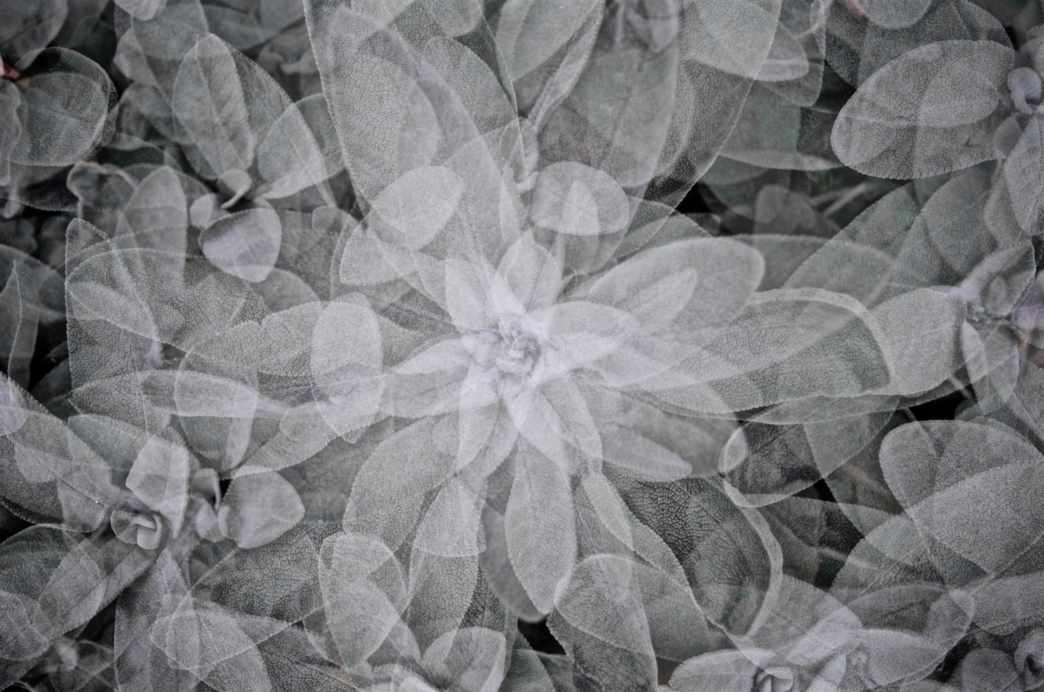 Peter Moritz, moritzform, photography, nature, leaves, multiple exposure