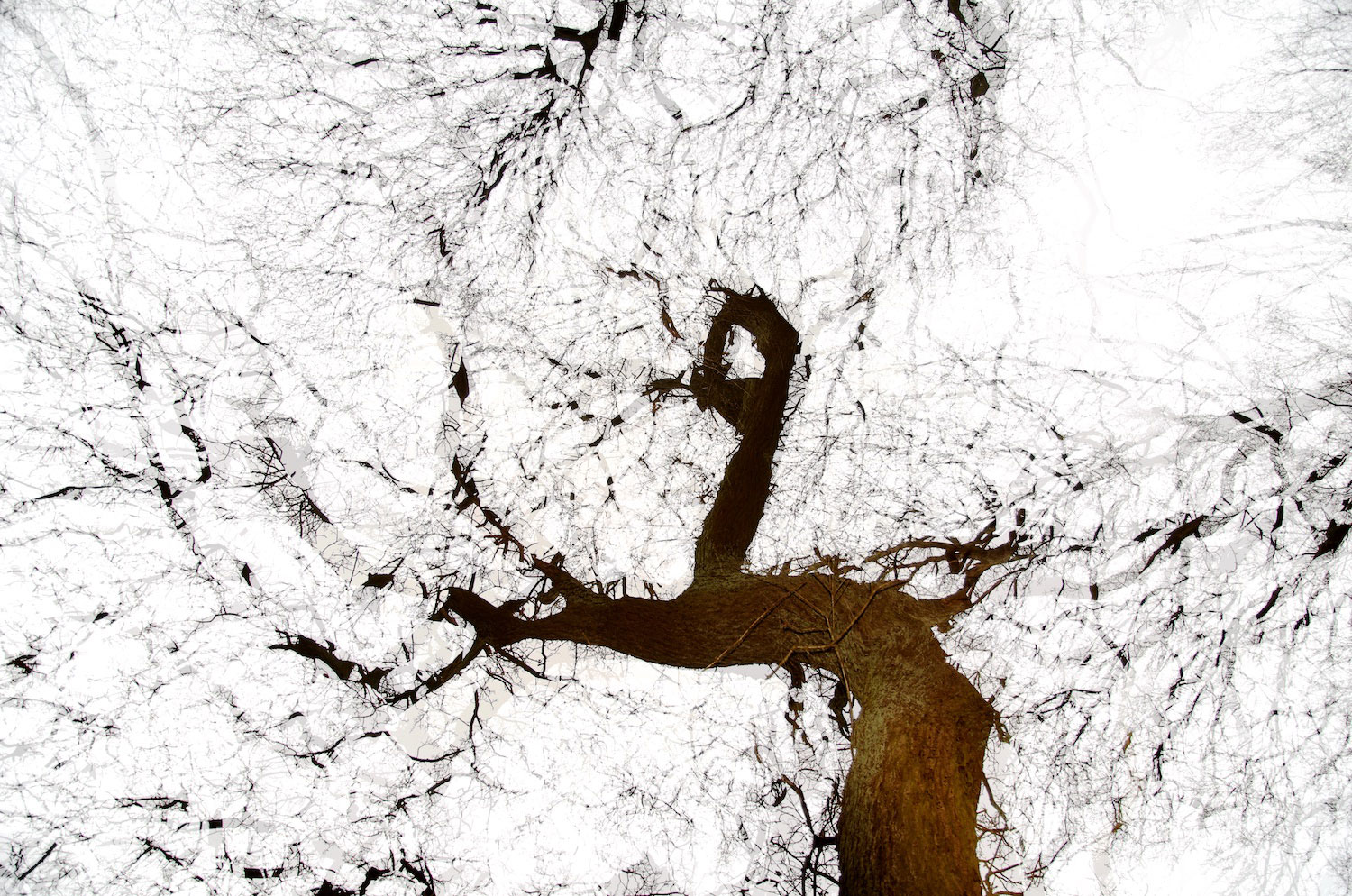 Peter Moritz, moritzform, photography, nature, tree, multiple exposure